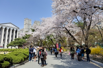 SEOUL, KOREA-APRIL 18: Students are walking and taking pictures at the campus street which is lined